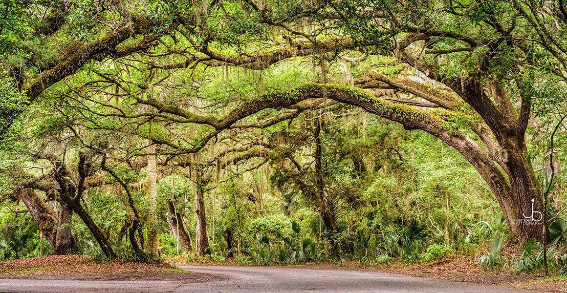 Tree Moss - Nassau County